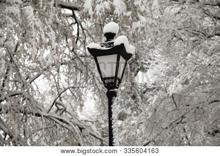 Lantern, Covered With Snow Between The Frosty Trees. Winter Park In The Central Part Of The City. Sn