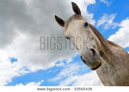 Gray horse against the sky