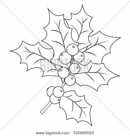 Clip Art Christmas Holly Drawing - Christmas Coloring Pages Holly ... | 470x450