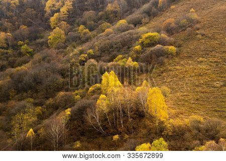 Rocky Landscape In The Autumn In The Mountains. Coniferous And Deciduous Trees Growing On A Hill. Hi