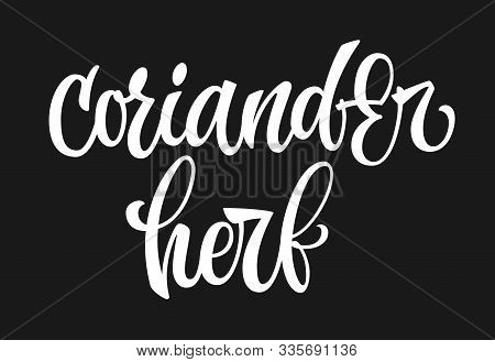 Vector Hand Drawn Calligraphy Style Lettering Word - Coriander Herb. Isolated Script Spice Text Labe