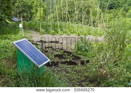 Orchard Vegetables Fertilized With A Natural Manure