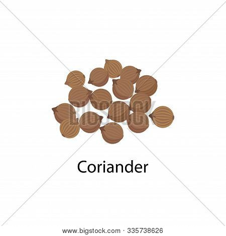 Coriander Spice Vector Illustration In Flat Design Isolated On White Background.