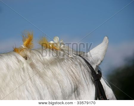 Horse Mane Braided With Flowers
