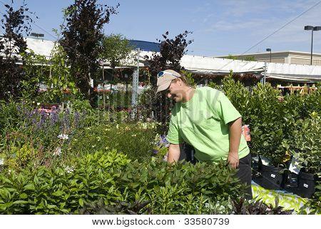 A Horticulturist Tends Plants