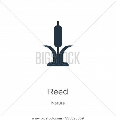 Reed Icon Vector. Trendy Flat Reed Icon From Nature Collection Isolated On White Background. Vector