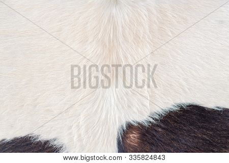 Texture Of Brown Cow Or Black Cowhide Animal Real Fur Background, Detail Of Wool Hair Texture. Patte