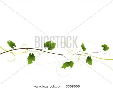Vine Floral Background