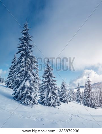 Fabulous winter landscape with covered snow trees. Magic wintry scene. Carpathian, Ukraine, Europe. Happy New Year! Winter nature wallpapers. Christmas holiday concept. Discover the beauty of earth.