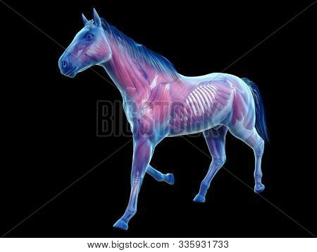 3d rendered medically accurate illustration of the equine anatomy - the muscle system