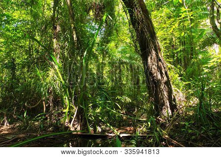 Verdant Jungle Of Swamp Fores In Thailand