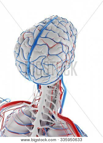 3d rendered medically accurate illustration of the vascular system of the brain