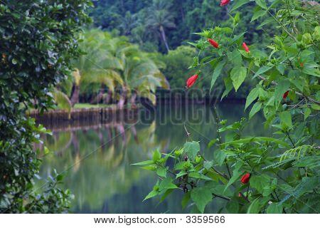 Fijilagoon