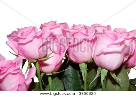 Bouquet Of The Pink Roses