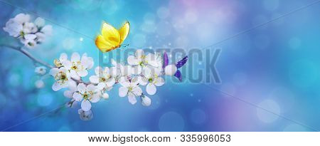 Beautiful Branch Of Flowering Apricot Tree With Yellow Butterfly In Blue Or Violet Spring Light Back