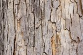 Wild tree bark close up detail shop poster