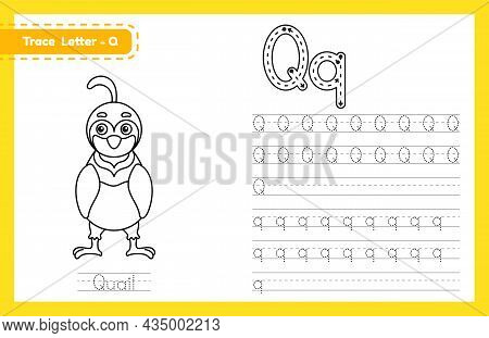 Trace Letter Q Uppercase And Lowercase. Alphabet Tracing Practice Preschool Worksheet For Kids Learn