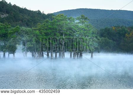 A Lake With Marsh Cypress Trees In The Fog Above The Water Before Dawn. Copy Space.