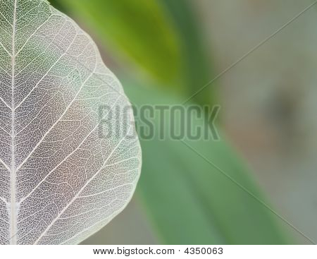 Close Up View Of The Leaf Texture. Shallow Depth Of Field