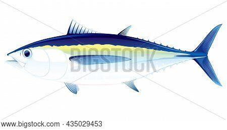 Blackfin Tuna Fish In Side View Illustration