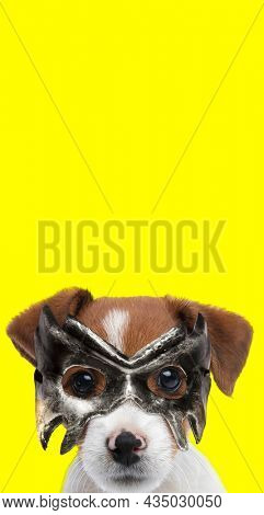 portrait of a cute jack russell terrier dog wearing a mask and being mysterious on yellow background