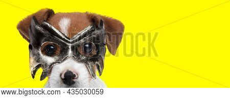 landscape of an adorable jack russell terrier dog hiding behind his mask on yellow background