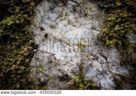 Rock Covered With Moss Close Up View | Macro Photo Of Green Moss On A Stone