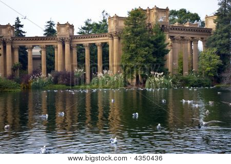 Seagulls Water Reflections Palace Of Fine Arts Museum San Francisco California