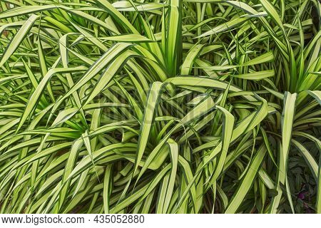 Top view of green grass texture for background.