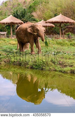 Asia Elephant Family Live In The Elephant Camp In Chiang Mai,