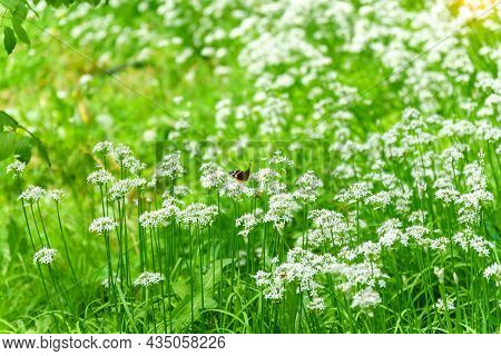 Meadow Field With Fresh Grass In Nature. Summer Spring Perfect Natural Landscape. Landscape, Copy Sp