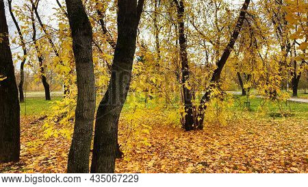 City Autumn Landscape, Yellow And Orange Leaves On Trees