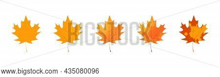 Withered Maple Leaf. Fallen Autumn Maple Leaf Icon