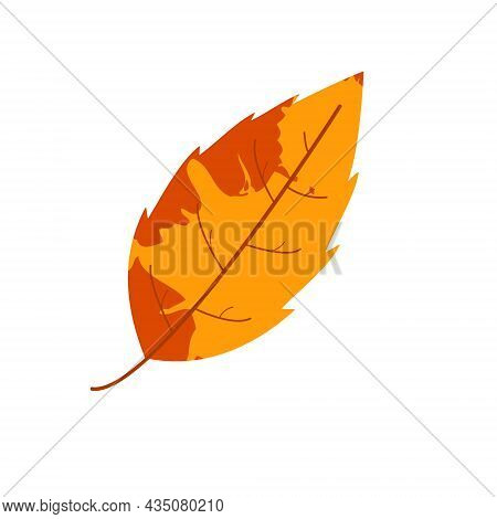 Withered Autumn Motley Leaf. Fallen Leaf With Blot Texture