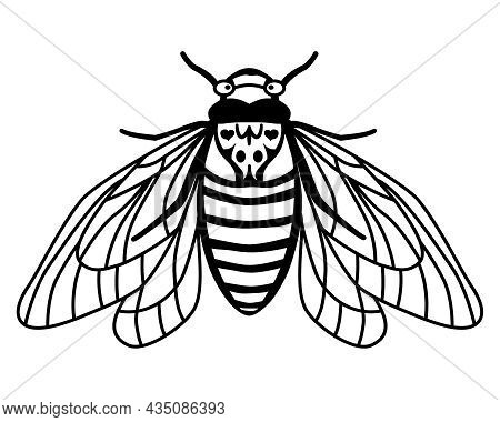 Periodical Cicada Brood X. Contour Drawing Of An Insect With Spread Wings. Linear Style. Silhouette