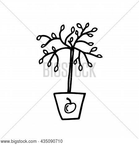 Vector Illustrations Seedling Apple Trees, Hand Drawn