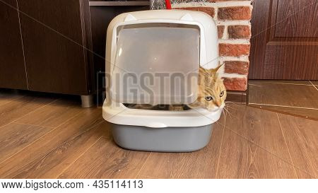 Cat Coming Out From Litter Box Closed After Defecation