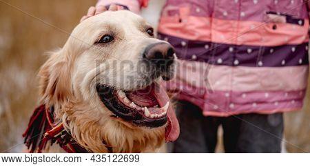 Portrait of golden retriever dog sitting beside palming little girl on nature in winter