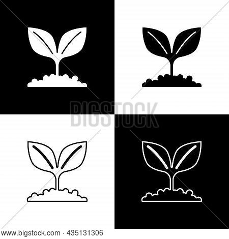 Set Plant Icon Isolated On Black And White Background. Seed And Seedling. Leaves Sign. Leaf Nature.