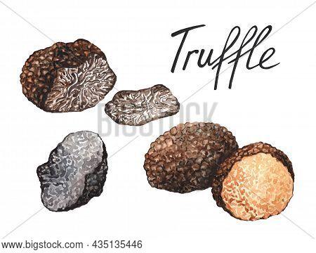 Black Truffle Mushrooms, Watercolor Hand Drawn Illustration Isolated On White Background