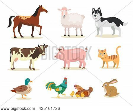 Different Cute Farm Animals Flat Vector Illustrations Set. Cow, Hen, Rooster, Chickens, Pig, Cat, Do