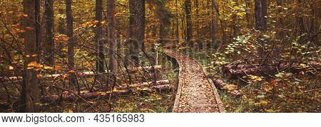Pathway In The Bright Forest. Autumn Falling Leaves