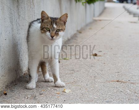 Hungry Stray Abandoned Cat On Street In Croatia Looking For Some Food