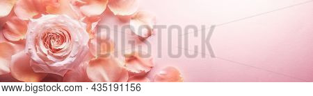 Close up of tenderness pink rose,copy space for your text.