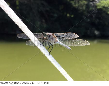 A Beautiful Dragonfly Sits Resting On A Line At The Water