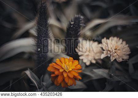 Still Life Flowers- Background Art