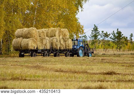 A Tractor Carries Hay Rolls On A Trailer Across An Empty Autumn Field At Cloudy Noon.
