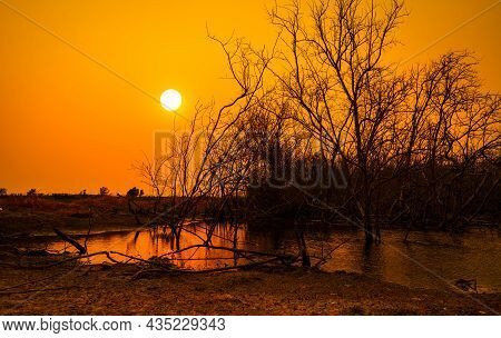Dead Trees In Lake And Orange Sunset Sky Background. Climate Change And Drought Land. Water Crisis.