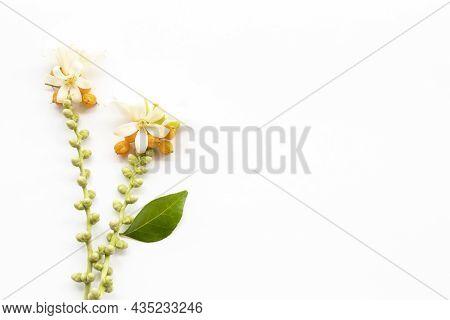 White Flowers Jasmine Arrangement Flat Lay Postcard Style On Background White