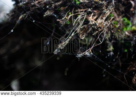 Spiderweb With Dew Drops On Hanging Tiny Plants Close Up   Macro Photo From Below Of Cobweb Threads